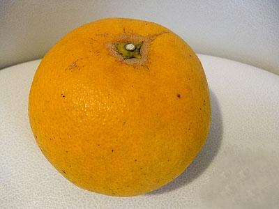 らでぃっしゅの清見オレンジ|らでぃっしゅローソン お試しセット